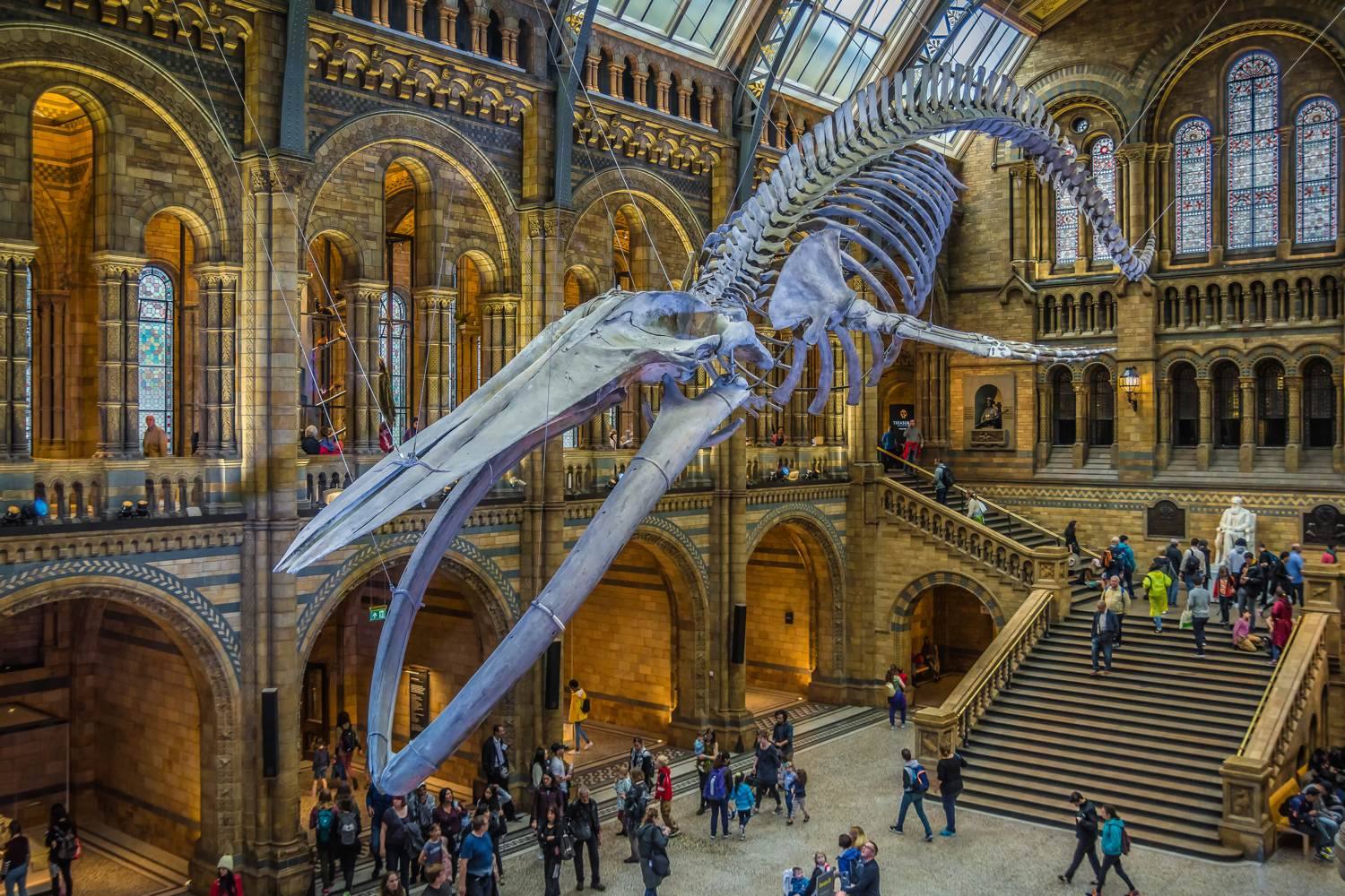 Natural History Museum Blue Whale skeleton